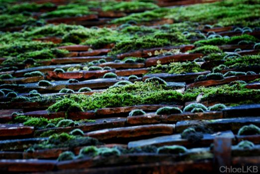 Moss Covered Roof by ChloeLKB