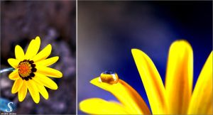 Yellow Drop. . . by Sha59-Ananii