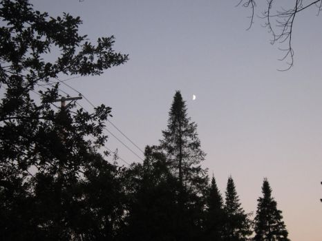 The Moon Above The Trees... by The-Bleeding-Poet