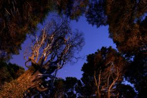 Full moon forest by PauloALopes
