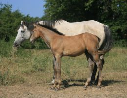 Mare and Foal 5 .:Stock:. by Photopolis