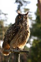 Eagle_Owl_VII by deoroller