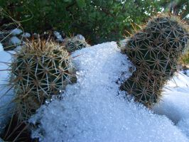 Cactus with Snow by IcejCat