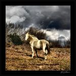 My kingdom for a horse... by Michel-Lag-Chavarria