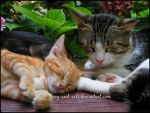 836 by evy-and-cats