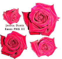 Roses Png II by StarsColdNight