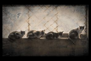 The Cat Gang by KateWalker