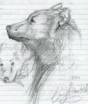 Bear sketch by masai