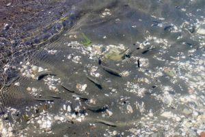 Fishes in Shallow by Anonimus79