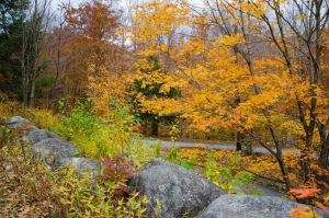 White Mountains  Fall Foliage  101 by FairieGoodMother
