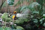 Golden Pheasant II by SunnYx3