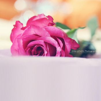 Colorful love by Miss-Photo
