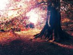 The Tree by xNatje