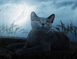 the cat 2 by mihael1116