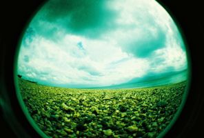 fisheye camarines - looking up by jcgepte
