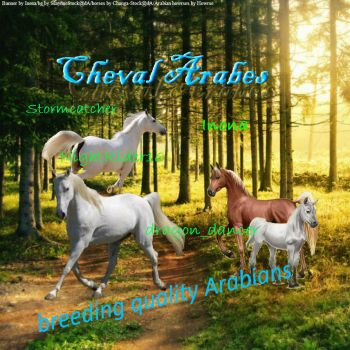 Cheval Arabes by Sputnk