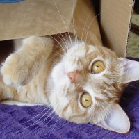 A bag within a box! by lucytherescuedcat