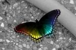 Butterfly by Zayix