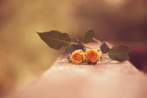Little Yellow Roses by incolor16
