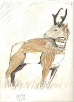 Pronghorn of Yellowstone by Dragon-of-Faith