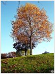 Colours of Fall (27.10.14) by LacedShadowDiamond