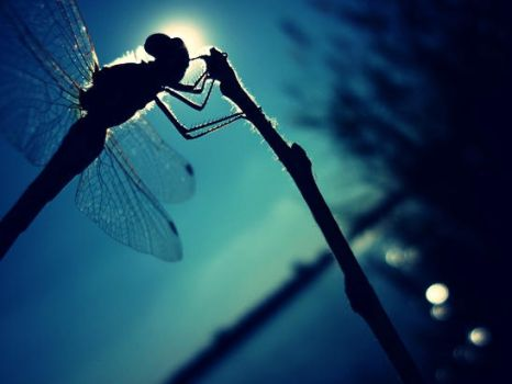 Dragonfly on the sky by AltruisticAngel