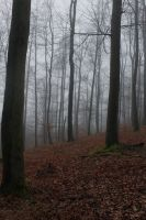 Foggy Forest 15 by sacral-stock