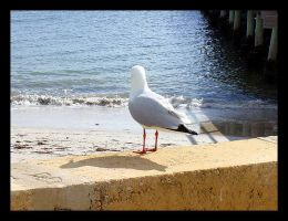 Seagull by tragedienne