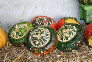 awesome pumpkins 16 by ingeline-art