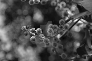 Fluffy Nature BW by dandelion-field