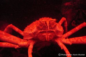 Spider Crab by covertsniper83