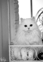 Orli-Pompom, my fluffy girl by AnnaGiladi