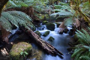 Waters of Tasmania by ThatScalieThing