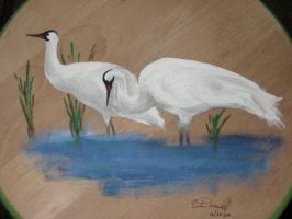 Whooping Cranes on Wooden Stool by KibaBird