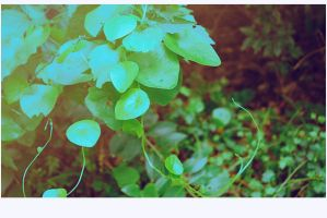 Leaves by dyefish