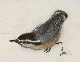 Red-Breasted Nuthatch by StreamThroughNebula