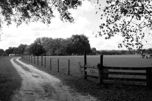 Country Road by FroglovinPhotogirl
