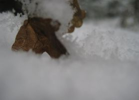 Sheet in the snow by Tassola