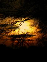 Tree of sun by Tigerente-in-love