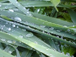 Grass and rain drops by HippieCase