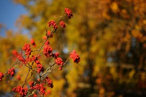 Autumn Berries Wallpaper by MarcoHeisler
