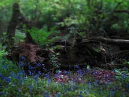 Bluebell Haze by NaturesTouch