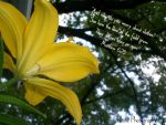 Lily by missiet