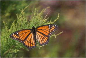 Butterfly Orange by SuicideBySafetyPin