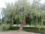Weeping Willow by Firehair12000