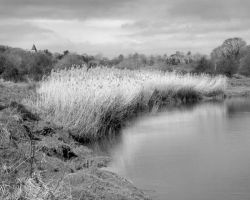 Reeds 0686 by filmwaster