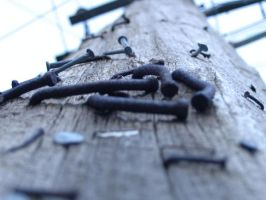Ants view up the powerlines. by mrpantsman