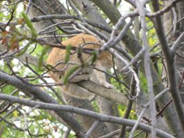 Cat in a Tree by eillahwolf