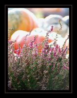 Heather and pumpkins by PhilipCapet
