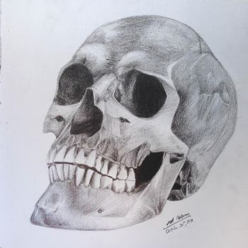 Skull - Charcoal/Graphite Drawing by art-nattanon
